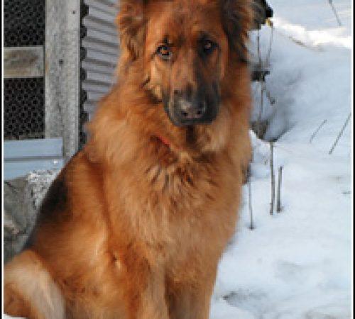 Bellona har hittat ett hem: 2011-03-13