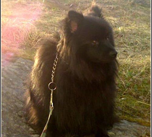 Benji har hittat ett hem: 2012-02-04